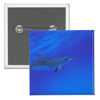 El Caribe, Bahamas manchó el delfín Pin Cuadrado