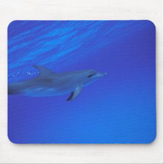 El Caribe, Bahamas manchó el delfín Tapete De Raton