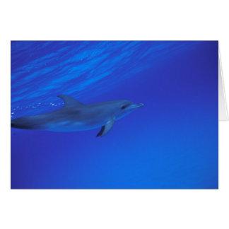 El Caribe, Bahamas manchó el delfín Tarjeta De Felicitación