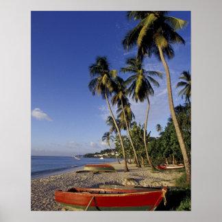 El CARIBE Grenada San Jorge barcos en la palma Poster