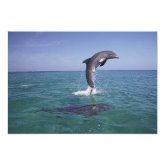 El Caribe, Tursiops 11 de los delfínes de Bottleno Fotografías