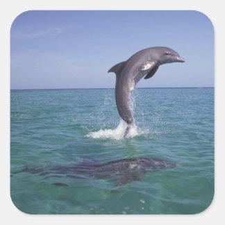 El Caribe, Tursiops 11 de los delfínes de Pegatina Cuadrada
