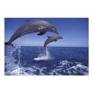 El Caribe, Tursiops 12 de los delfínes de Bottleno Fotografía