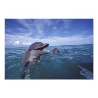 El Caribe, Tursiops 16 de los delfínes de Bottleno Fotografía