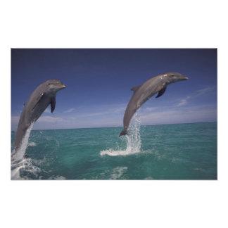 El Caribe, Tursiops 17 de los delfínes de Bottleno Fotografía
