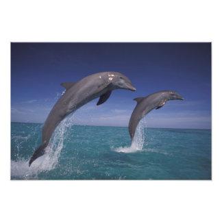 El Caribe, Tursiops 2 de los delfínes de Bottlenos Fotografías