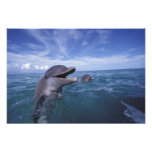 El Caribe, Tursiops 2 de los delfínes de Bottlenos Arte Fotografico