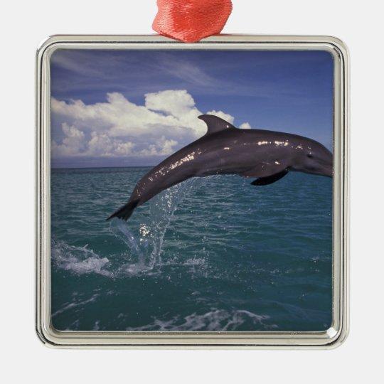 El Caribe, Tursiops 2 del delfín de Bottlenose Adorno Navideño Cuadrado De Metal