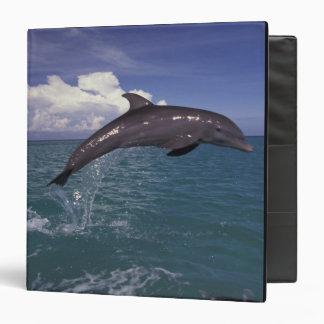 """El Caribe, Tursiops 2 del delfín de Bottlenose Carpeta 1 1/2"""""""