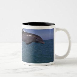 El Caribe Tursiops 2 del delfín de Bottlenose Taza De Café