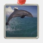 El Caribe, Tursiops 3 del delfín de Bottlenose Ornatos
