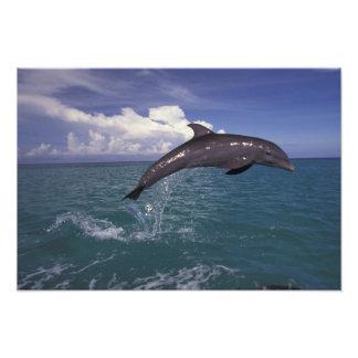 El Caribe, Tursiops 3 del delfín de Bottlenose Fotografía