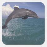 El Caribe, Tursiops 3 del delfín de Bottlenose Pegatina Cuadradas Personalizadas