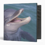 """El Caribe, Tursiops 4 del delfín de Bottlenose Carpeta 1 1/2"""""""