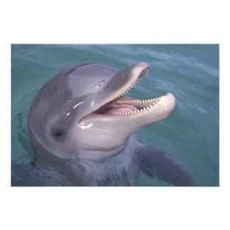 El Caribe, Tursiops 4 del delfín de Bottlenose Fotografía