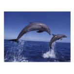 El Caribe, Tursiops 7 de los delfínes de Bottlenos Postal