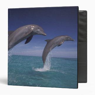 """El Caribe, Tursiops 8 de los delfínes de Bottlenos Carpeta 1 1/2"""""""