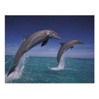 El Caribe, Tursiops 8 de los delfínes de Postal
