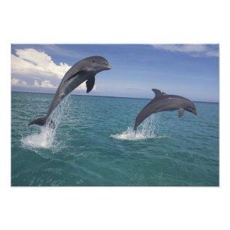 El Caribe, Tursiops 9 de los delfínes de Bottlenos Fotografías