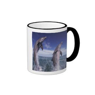 El Caribe Tursiops de los delfínes de Bottlenose Tazas