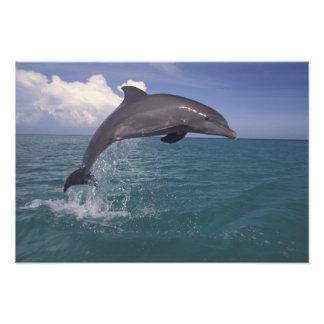 El Caribe, Tursiops del delfín de Bottlenose Fotografías