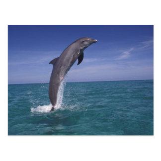 El Caribe, Tursiops del delfín de Bottlenose Postal