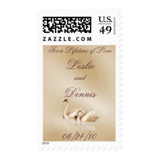 El casarse cariñoso de los cisnes sellos