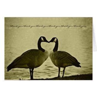 El casarse romántico de los gansos le agradece tarjeta de felicitación