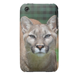 El caso hermoso del iphone 3G de la foto del puma iPhone 3 Carcasa