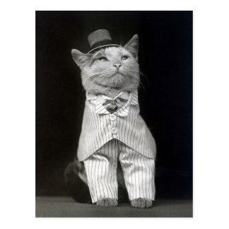 El Cat apuesto, 1906 Tarjetas Postales
