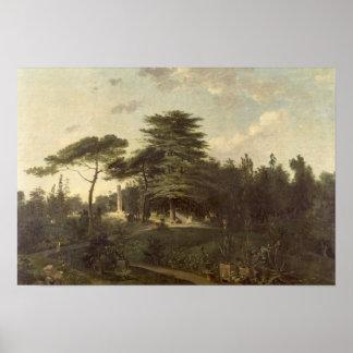 El cedro de Líbano en el Jardin des Plantes Póster
