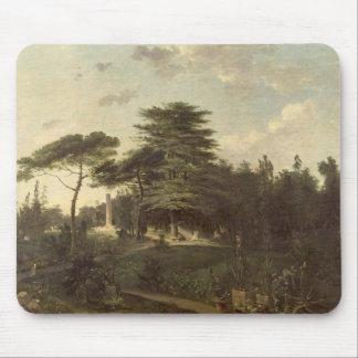 El cedro de Líbano en el Jardin des Plantes Alfombrilla De Raton