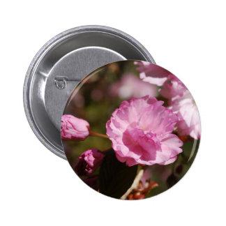 El cerezo florece botón