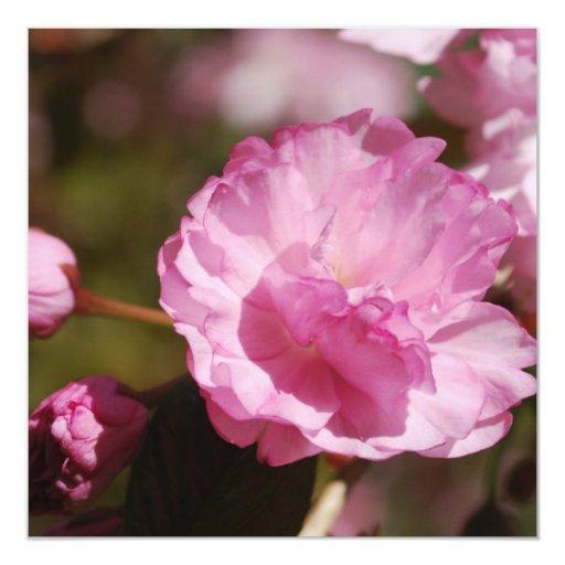 El cerezo florece las invitaciones comunicado personalizado