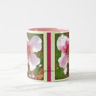 El cerezo florece taza del té del café cerca