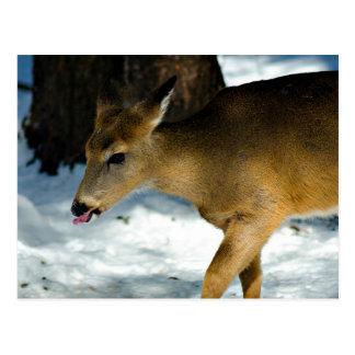 El cervatillo del invierno se pega hacia fuera la  tarjeta postal