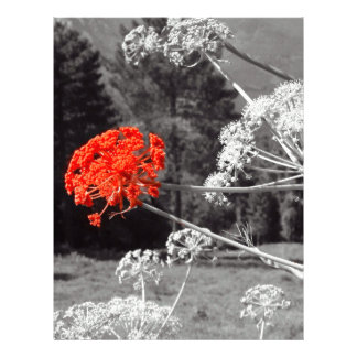El chapoteo de B&W, florece rojo Membrete A Diseño