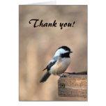 El Chickadee le agradece