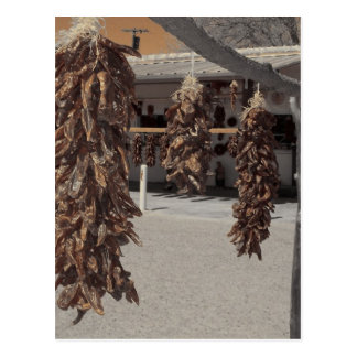 el chil de la sepia sazona arte al sudoeste del pi tarjeta postal