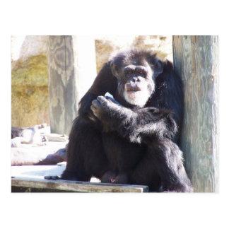 el chimpancé viejo postales