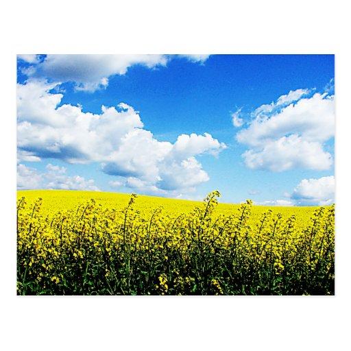 El cielo del paisaje de la naturaleza cultiva las  tarjetas postales