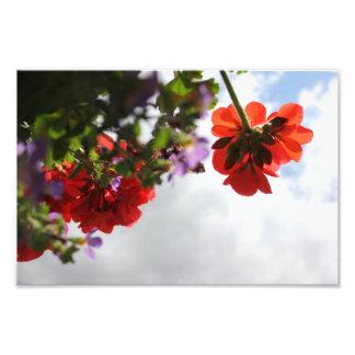 """El """"cielo florece"""" 12x8 fotografías"""