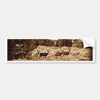 El ciervo mula hace etiqueta de parachoque