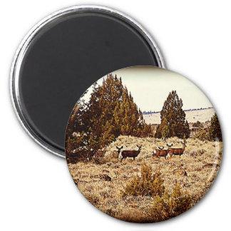 El ciervo mula hace iman para frigorífico