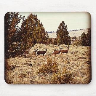 El ciervo mula hace tapetes de ratón