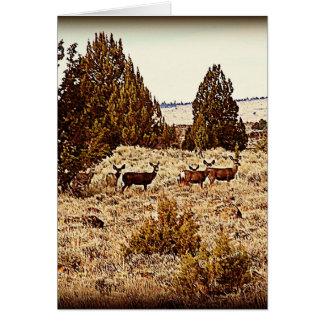El ciervo mula hace felicitaciones