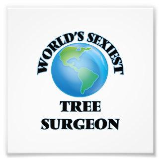El cirujano del árbol más atractivo del mundo arte fotográfico