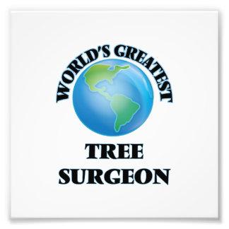 El cirujano del árbol más grande del mundo fotografias