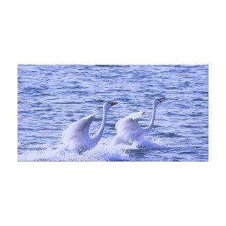 El cisne blanco cariñoso estiró la impresión de la impresion en lona