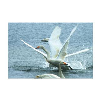 El cisne blanco hermoso estiró la impresión de la  lona envuelta para galerias